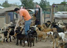Mejorar refugio para perros [ARGENTINA]