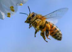 Les abeilles de Brisemiche - saison 2