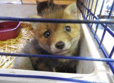 Sauvons Le Centre de Sauvegarde de la faune sauvage de Millau