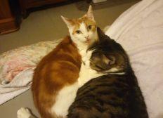 Aide aux chats en détresse 95