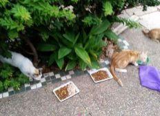 Soutien pour mes chats& Aide pour soins et nourriture