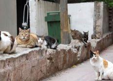 Esterilización Gatos callejeros