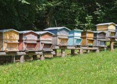 Le rucher boïens