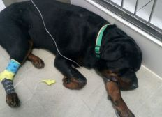 Ayuda hospital veterinario Rambo