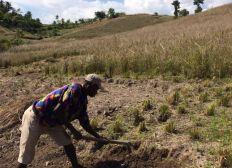 Promouvoir une production durable du Vétiver en venant en appui aux producteurs en Haïti