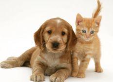 Pour aider les animaux
