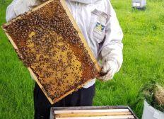 Les abeillers du lac de ribou