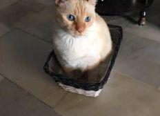 Ayuda a mi gato