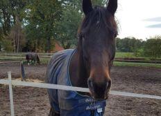 Ausrüstung für neues Volti-Pferd