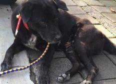 Save a Bali Dog