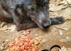Salvando vidas caninas