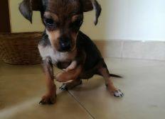 Urgencia veterinaria