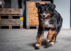 Spenden für den kranken Rettungshund Xavi!