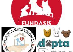 Capital para Financiar de Refugios Animales.