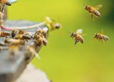 Le Sanctuaire des abeilles Ardéchoise