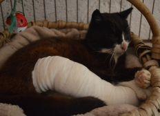 Mardi 8 août, cest la journée internationale du chat !