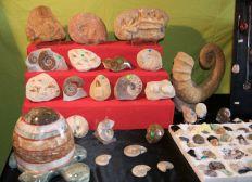 Création d'un musée de Minéraux et Fossiles