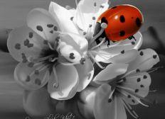 LadyBird, micro ferme écologique, entomologique et pédagogique