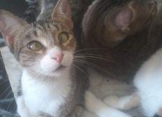 Aide pour louer une maison pour les chats de souad menacés par les voisins