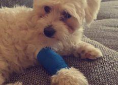 Für Bella's Tierarztkosten