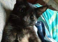 Operación urgente de Chora la gata