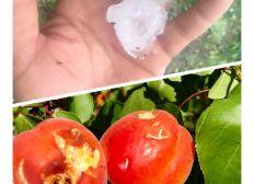 Avec Aurelien, sauvons et protégeons son exploitation agricole familiale suite aux violents orages de grêle !