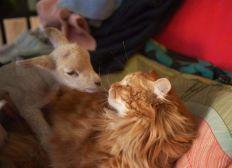URGENCE frais vétérinaires pour les animaux d'AEP