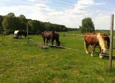 Gnade für Pferde- Gnadenhof