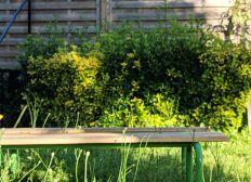 Le jardinage à l'école Charcot