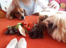 Des animaux auprès des enfants hospitalisés (Zoothérapie)