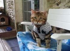 Aide aux frais vétérinaires / Association Cara-Pattes