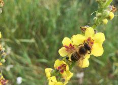 Bienen retten! Imkern für den Umweltschutz