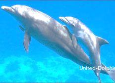 United-Dolphins e.V.