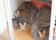 Les chats de la SPA Canche-Authie ont besoin de Vous