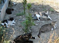 Chats libres à l'abri
