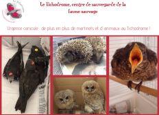 Au secours des animaux du Tichodrome