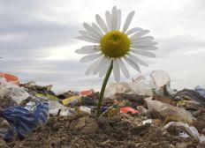 Stop aux déchets sauvages