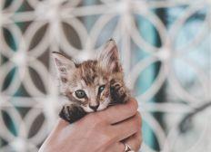 Help Bali animals