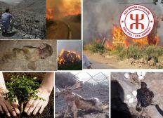 La Kabylie brûle, soyons solidaires