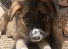 Spendenaktion unserer Tierschutztour durch Ungarn & Rumänien