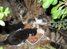 Les 250 chats libres de l Île du Ramier