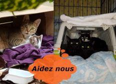 Aide à stérilisations, premiers soins et mises à l'abri de chat errants par bénévoles confirmées