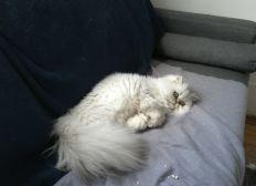 Sauvez mon chat Litchi