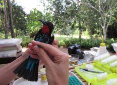 ONG Cameroun - Oiseaux et Education