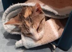 Gastos veterinarios e incineraciones Agosto