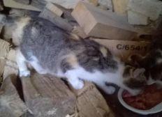 besoin d'aide pour stérilisation chatte gestante