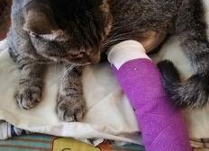 Pour piquette, ma chatte, qui a besoin de soin pour 2 a 4 mois.  Je n'ai qu'une pension andiquapé.