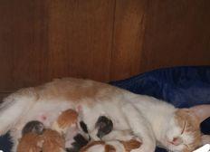 Parrainer Calyce et ses bébés chatons