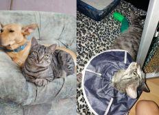 Spendenaktion für Unfall-Katze Ilse