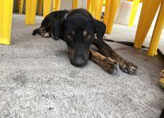 Une amour de chienne à sauver de l'euthanasie !!